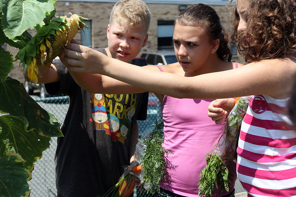 ALLEGRA BOVERMAN/Staff photo. Gloucester Daily Times. Gloucester: From left, learning how to harvest edible sunflower seeds from a sunflower, are: Gabe LaDuke, Alyssa Lane and Yvette Pallazola, all 12 and of Gloucester, at The Open Door's garden on Thursday. They are regular participants in the Summer Lunch program there, and then once they eat, they can harvest whatever's ripe in the garden.