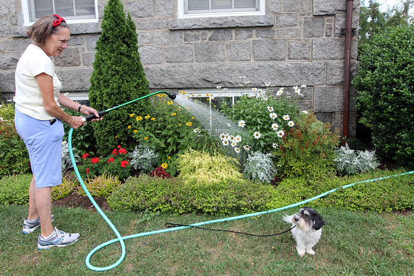 ALLEGRA BOVERMAN/Staff photo. Gloucester Daily Times. Rockport: Rockport Garden Club member Deborah Cowan waters the gardens at the Rockport Public Library that the club maintains. She is part of a rotating team of members who water and deadhead there. Her dog Monte keeps her company.