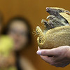 "ALLEGRA BOVERMAN/Gloucester Daily Times A three-banded armadillo named Taco wakes up and stretches as part of a ""Creatures of the Night"" program at Sawyer Free Library in Gloucester on Wednesday as part of the summer reading program. Mona Headon of Critters 'N Creatures of Merrimack N.H. was displaying a variety of nocturnal animals such as a scorpion, a gecko, a fruit bat, a ball python and other animals."