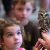 ALLEGRA BOVERMAN/Gloucester Daily Times Jim Parks of Wingmasters talks about Northern Saw Whet owls, such as this one, during his demonstration of several owls and an American kestral that are native to New England as part of the summer reading program at Rockport Public Library on Wednesday afternoon. The event was sponsored by the Friends of the Rockport Public Library. Wingmasters rescues and rehabilitates injured raptors. Looking on from left are: Julia Schena, and behind her, Michael Elinskas, both six and both of Rockport.
