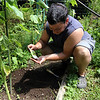 "ALLEGRA BOVERMAN/Gloucester Daily Times. Lee Rizzitiello, of Gloucester, tends the vegetable garden at Wellspring House. He was planting lettuce seeds on Wednesday so they will be ready in the fall when it's cooler. He grows broccoli, tomatoes, basil, peppers, pole beans, kale, pumpkins and more. He also built a composting area. He said he was loading the lettuce seeds into the area he chose for them ""and hope for the best."" He is studying to be an occupational therapist and one of the reasons he loves the garden is because he wants to use gardening and farming as a therapeutic tool eventually."