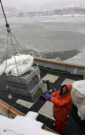 Manchester: Jeff Anthony helps unload lobsters in the snow off the lobster boat Intuition in the icy waters of Manchester Harbor by Masconomo Park Thursday afternoon.  Mary Muckenhoupt/Gloucester Daily Times