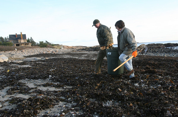 Rockport: Mike Kassner and Maureen O'Kelly carry a barrel full of seaweed from Pebble Beach to use as fertilizer in their garden. The two spread the seaweed over the beds now and mix it into the soil in the spring just before planting. Photo by Kate Glass/Gloucester Daily Times Monday, December 14, 2009