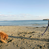 Manchester: Kathy Donaghey plays catch with her dog, Emma, at Singing Beach on Tuesday afternoon. Emma would fetch the ball, then bury it in the sand. Photo by Kate Glass/Gloucester Daily Times Wednesday, December 8, 2009