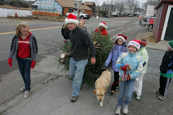 Essex: Devin McLaughlin heads home with the family Christmas tree down Main street Saturday afternoon. Devin says this is something the McLaughln Lantz family does every year. Mary Muckenhoupt/Gloucester Daily Times