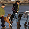Gloucester: From left Sam Polisky, 11, of Gloucester and his mom Nicole, and sister Eve, 9, take their dogs, Rumi and Shams, for a walk on Good Harbor Beach Friday afternoon. Nicole commented on how warm it was at the beach.  The weather will stay on the warm side through Monday with temperatures reaching 50 degrees on Saturday. Mary Muckenhoupt/Gloucester Daily Times