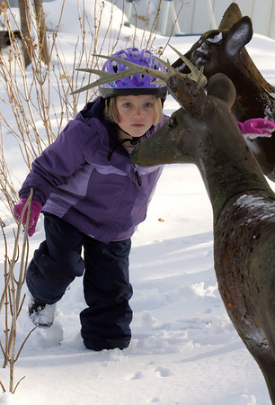 Manchester: Mackay Brooks, checks out some fake deer in her neighbor's yard on Pleasant Street while taking a brake from sledding in her own yard Saturday morning. Mackay cleaned off the snow from the deer and game one a kiss on the nose. Mary Muckenhoupt/Gloucester Daily Times