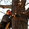 "ALLEGRA BOVERMAN/Staff photo. Gloucester Daily Times. Gloucester: Brent ""Ringo"" Starr of MBT Electricians, Inc. changes light bulbs on the many trees along Main Street in downtown Gloucester on Friday afternoon. He said there are at least 2,000 bulbs to be replaced just on that street."