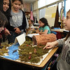 ALLEGRA BOVERMAN/Staff photo. Gloucester Daily Times. Gloucester: West Parish third graders discussed their research about various Native American nations during their class's Native American presentation on Wednesday at the school. Each student in the class did extensive research about different Native American nations, wrote up their research, complete with illustrations, and created dioramas of how each nation set up their homes and then presented their findings to other students and parents. At far right, Lauren Movalli talks about the Iroquois Indians of upstate New York as fourth graders ( from left) Alessia Saputo, Hafsa Ahmed and Tesia Whitcomb closely examine her diorama.