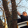 ALLEGRA BOVERMAN/Staff photo. Gloucester Daily Times. Gloucester: Bob Francis of MBT Electricians, Inc. changes light bulbs on the many trees along Main Street in downtown Gloucester on Friday afternoon. There are at least 2,000 bulbs that need to be changed just on that street.