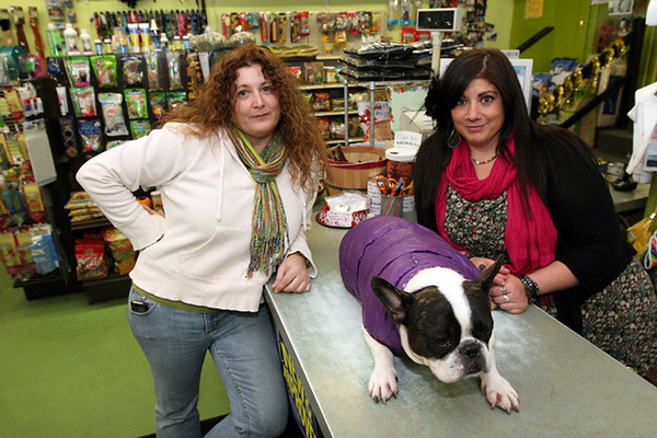 ALLEGRA BOVERMAN/Staff photo. Gloucester Daily Times. Gloucester: Susan Giglio, left, owner of Animal Krackers, with manager Stacy Interrante, right, and her French bulldog Dozer, at center, in the Main Street store.