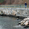Allegra Boverman/Gloucester Daily Times. The seawall along Stacey Boulevard and into Stage Fort Park is damaged in several areas. The areas shown here were bolstered with extra rock where the wall collapsed.