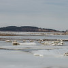 Desi Smith Staff photo/Gloucester Daily Times.   Hog Island is seen in the background as chunks of ice float on the Essex River Friday afternoon .   January 31,2013.