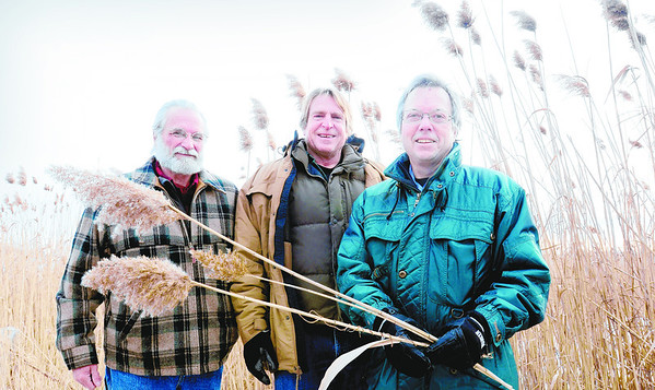 "Bryan Eaton/Gloucester Daily Times<br /> Newbury Selectman Geoff Walker, left, joins with Merrimack Valley Planning Commission's Peter Phippen and film maker Richard Hydren, right, at a stand of phragmites on Ring's Island in Salisbury. Hydren, of Rowley-based Staddles Production, is the producer of the phragmite documentary ""Danger in the Reeds."""