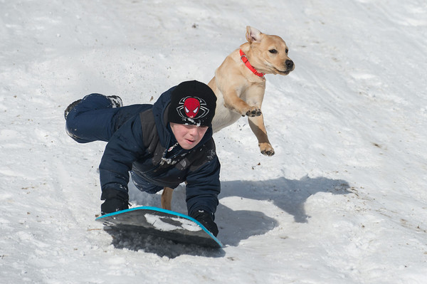 Desi Smith /Gloucester Daily Times.  Charlie Terelak 11, of Gloucester was being chashed down the hill by Juno a 5 month old yellow lab owned by Brian Linn of Gloucester. Juno caught up to Charlie as he hit the jump making contact with Juno, sending them both into the air Sunday morning at Evens Field in Rockport.    February 16,2014.