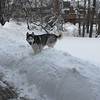 GAIL McCarthy/Staff photo<br /> One Rockport canine , Sitka, loves the snowfall.