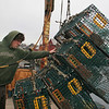 Rockport: Ryan Browne of Gloucester helps to unload lobster traps off his friend's boat at T-Wharf Wednesday afternoon. Mary Muckenhoupt/Gloucester Daily Times
