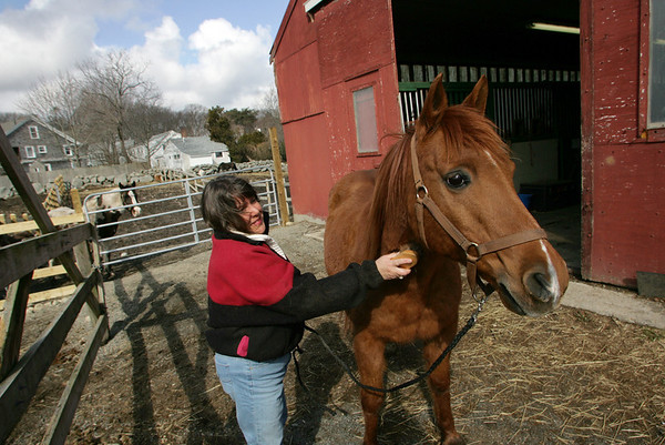 Rockport: Donna Cusick brushes her horse Cory Jo at Sea View Farm Saturday morning.  Cusick was surprised by the nice weather and was planning on taking Corey Jo for a ride down the lane while the sun was shining. Mary Muckenhoupt/Gloucester Daily Times