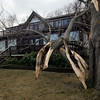 Gloucester: Two large tree limbs came crashing down on part of the Ocean View Inn on Atlantic Road during the storm the hit Cape Ann Thursday night into Friday morning.  Mary Muckenhoupt/Gloucester Daily Times