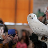 Gloucester: Marcia Wilson shows the crowd a snowy owl as her husband Mark speaks during Eyes on Owls at the Gloucester Elks Club as part of the Cape Ann Winter Birding Weekend sponsored by the Cape Ann Chamber of Commerce Saturday afternoon. The weekend included guided field trips, expert speakers and a boat trip out to Stellwagen Bank. Mary Muckenhoupt/Gloucester Daily Times