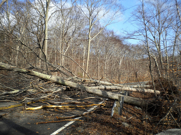 Rockport: A numbers of trees fell on Thatcher Road taking out power lines and closing the street Friday morning. Jon L'Ecuyer/Gloucester Daily Times