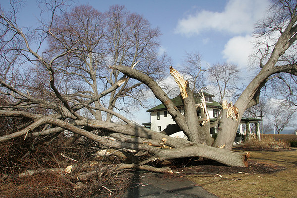 Gloucester: A large tree came down in front of a home on Marmion Way after a storm with hurricane force winds hit Cape Ann Thursday night into Friday morning. Mary Muckenhoupt/Gloucester Daily Times