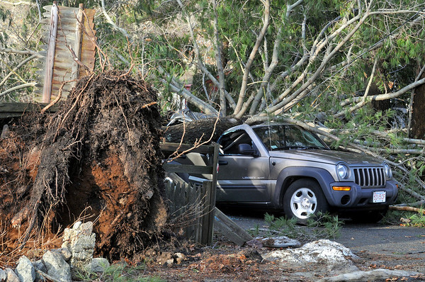 Gloucester: A tree fell on the car of Sheila Brown at Becker Lane after a storm packing hurricane force winds hit Cape Ann Thursday night into Friday morning. Desi Smith/Gloucester Daily Times