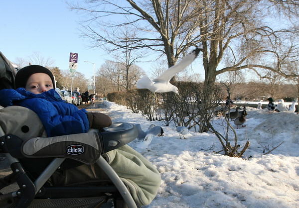 Manchester: Anton Gilson, 18 months, watches the seagulls and ducks at Masconomo Park yesterday afternoon. His mother says they try to watch the birds whenever the weather is nice. Photo by Kate Glass/Gloucester Daily Times