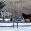 Essex: Horses graze on hay spread out across the snow in a pasture off King's Court in Essex. Photo by Kate Glass/Gloucester Daily Times