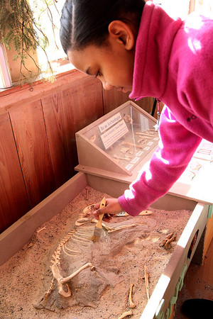 ALLEGRA BOVERMAN/Staff photo. Gloucester Daily Times. Gloucester: Raysa Zorrilla, 12, of Gloucester, brushes away debris to examine an animal skeleton at the Cape Ann Learning & Discovery Center while visiting there with her sisters and brother on Thursday.