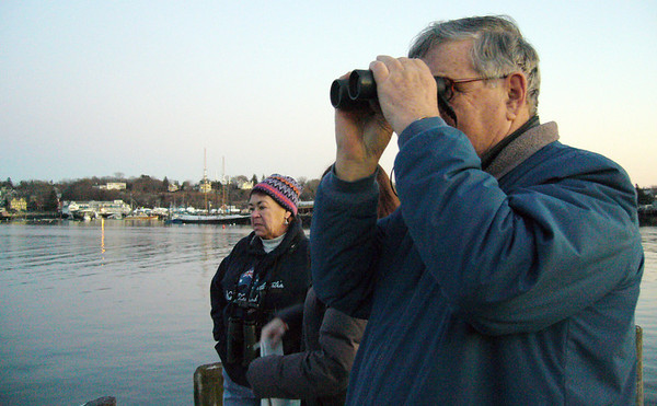 ALLEGRA BOVERMAN/Staff photo. Gloucester Daily Times. Gloucester: Donna and her husband Dick Marchant, both of Gloucester, saw possibly two whales in Smith's Cove and inner Harbor in the area between Cruiseport to Harbor Loop on Thursday afternoon.