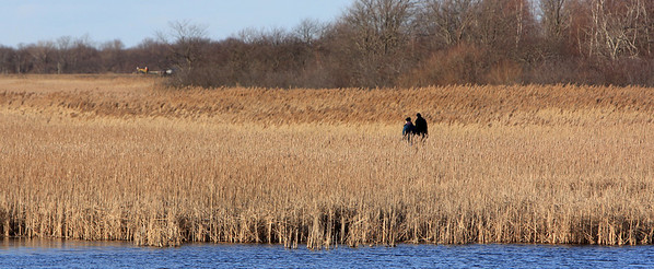 ALLEGRA BOVERMAN/Staff photo. Newburyport Daily News. Newburyport: People walk along a marsh trail in the Hellcat Wildlife Observation area of Parker River National Wildlife Refuge.