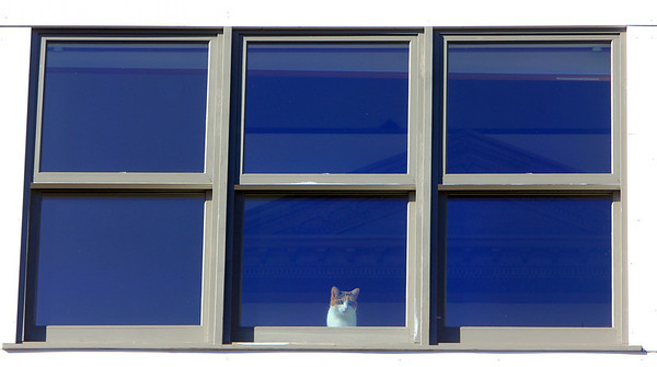 Allegra Boverman/Gloucester Daily Times. Gabby the cat keeps an eye on things from the top floor in Lanesville.
