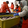 Gloucester: Clemente Mejia sends a container of haddock down to be iced as workers unload a day's catch at the Gloucester Seafood Dislpay Auction Thursday afternoon. Mary Muckenhoupt/Gloucester Daily Times