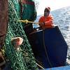 Gloucester: A cod pokes out of the net as Mario Orlando guides the net up to the Padre Pio. Photo by Kate Glass/Gloucester Daily Times