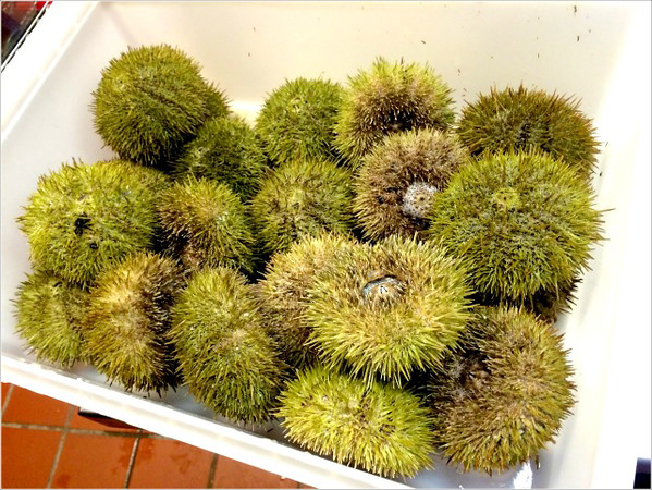 "Heather Atwood/Special to the Times<br /> The eggs from these prickly green sea-urchins are scooped out, and used as the binding ""egg""in Pinoli's ""Cabonara di Mare,""a luxurious bowl of homemade pasta tubes and seafood."