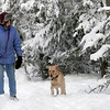 Gloucester: Caite Salmon of Gloucester walks with her dog, Rosie, through Ravenswood Park yesterday morning. The fresh snow provided for a very scenic walk. Photo by Kate Glass/Gloucester Daily Times Monday, January 12, 2009