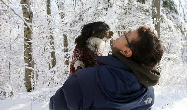 Gloucester: Oggie, a Puerto Rican Sato, tries to give Scott Elledge of Rockport a kiss as they walk through Ravenswood Park yesterday morning. Photo by Kate Glass/Gloucester Daily Times Monday, January 12, 2009