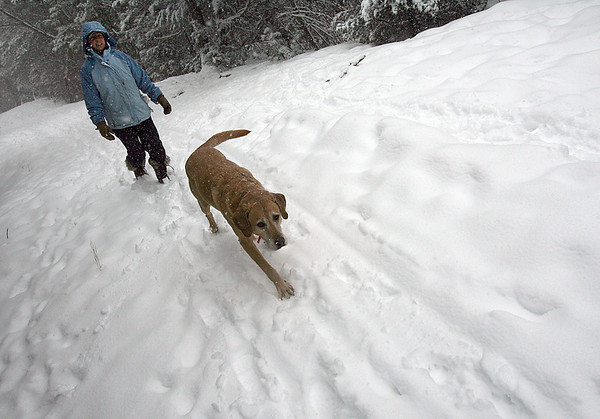 "Gloucester: Charlene Pearson of Gloucester and her dog, Fred, go on a snowy walk through Dogtown on Wednesday. Pearson says she loves the snow. ""I think it's beautiful."" Photo by Kate Glass/Gloucester Daily Times Wednesday, January 28, 2009"