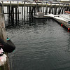 Gloucester: Flowers have been tied to the ladder at the Jodrey State Fish Pier where the Patriot had been docked. The boat sank on Saturday, taking the lives of Gloucester fisherman Matteo Russo and his father-in-law, John Orlando. Photo by Kate Glass/Gloucester Daily Times Monday, January 5, 2008