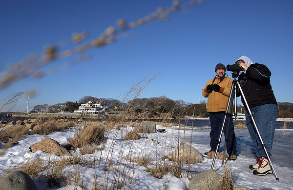 Gloucester: Art and Phyllis VanDeusen of New Market, N.H. search for the ivory gull at Eastern Point yesterday afternoon. The Cape Ann Chamber's first Weekend Birding Weekend is hoping to bring many birders to the area this weekend. Photo by Kate Glass/Gloucester Daily Times Thursday, January 29, 2009