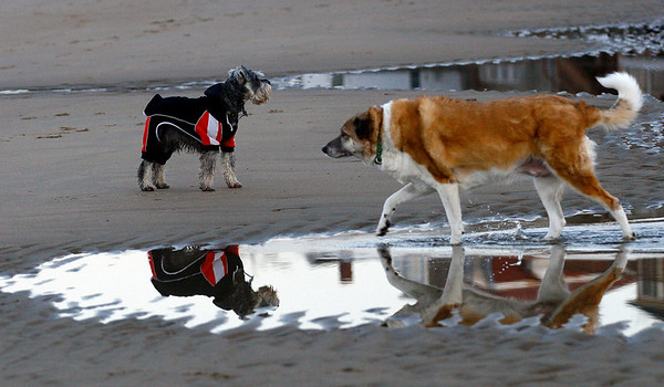 Rockport: Spencer, left, dressed in his sweatpants, and Sage, right, play in the tide pools at Front Beach on Tuesday afternoon. Photo by Kate Glass/Gloucester Daily Times Tuesday, January 27, 2009