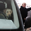 Gloucester: Gracie takes her turn behind the wheel while Dossie Campbell of Gloucester fills up her car at the Hess station Monday afternoon. Campbell runs a dog walking business and had a full car. Photo by Kate Glass/Gloucester Daily Times Tuesday, January 6, 2009