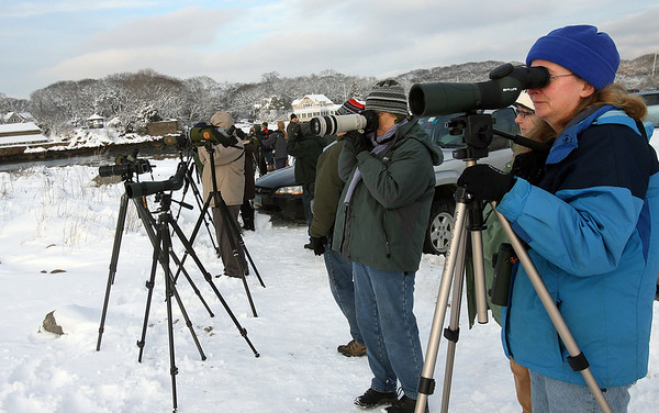 Gloucester: Deb LaRoy of Newbury joins dozens of birders on Eastern Point to search for an Ivory Gull, which is usually only found in arctic climates. The bird was first spotted on Saturday and has been seen periodically throughout the weekend. Photo by Kate Glass/Gloucester Daily Times Monday, January 19, 2009