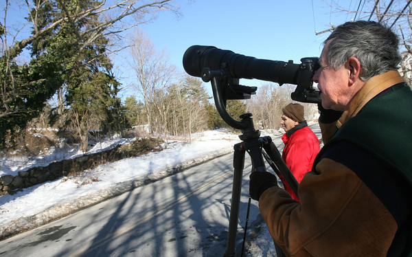 Essex: Andy Provost of Westport captures a photo of a screech owl in a tree on Western Ave. between Pickering Street and John Wise Ave. yesterday afternoon. Provost said the owl was around about five years ago and heard of its return through the Audubon Society. Photo by Kate Glass/Gloucester Daily Times
