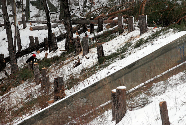 Gloucester: Arborists remove sixty trees from the Babson Reservoir because they were compromising the dam structure. Photo by Kate Glass/Gloucester Daily Times