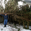 Essex: Brad Knowlton stands by a spruce tree that fell on his home during the snow storm last week. Knowlton was waiting for help to clear the tree away Saturday and was glad that no one as hurt when the tree hit his Addison Street home breaking through his bedroom window. Mary Muckenhoupt/Gloucester Daily Times