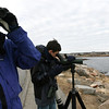 ALLEGRA BOVERMAN/Staff photo. Gloucester Daily Times. Gloucester: Avid birders James Orrico, left, and his grandson Alex Burdo, both of Fairfield, Conn., were looking for unusual birds in Cape Ann and other areas nearby on Wednesday. While in Gloucester along Atlantic Road, they saw a male king eider, which, according to them, is rarely seen except very occasionally in the Gloucester area. They also saw a Townsend's warbler in Ipswich and other birds such as white-winged scoters, red -necked grebes and common goldeneyes. They participate in bird counts via ebird.com, part of the Cornell Lab of Ornithology. They travel together all over the country looking for birds.