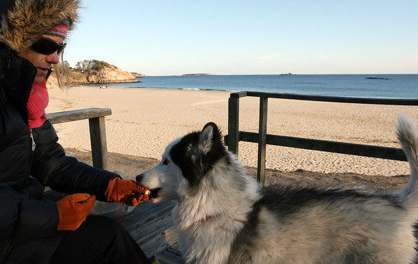 ALLEGRA BOVERMAN/Staff photo. Gloucester Daily Times. Manchester: Kris Miller of Beverly Farms, who just moved to the area from Idaho, eats lunch at Singing Beach with her Siberian Husky, Angus, 5, on Wednesday afternoon. The ocean was very calm midafternoon.