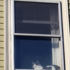 ALLEGRA BOVERMAN/Staff photo. Gloucester Daily Times. Gloucester: A cat sits in a sunny window in a home on Addison Street on Tuesday.